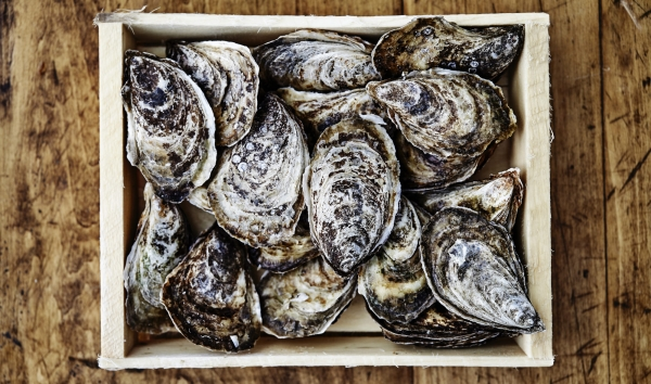 Annual St. George event has everyone thinking oysters
